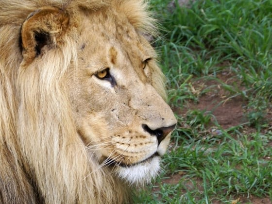 De Big 5 in Kruger Nationaal Park